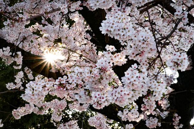 f:id:hira2shiatsu:20190404150410j:image