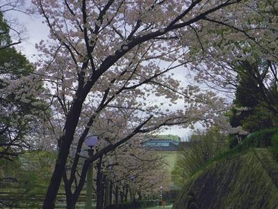 f:id:hirabarimaru:20170425081209j:plain