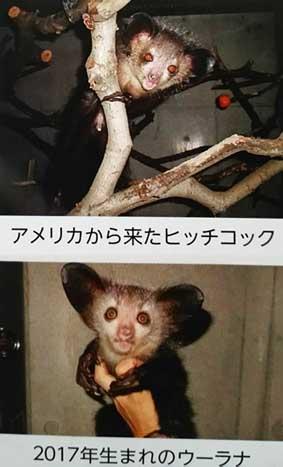 f:id:hiraitako:20190216142557j:plain
