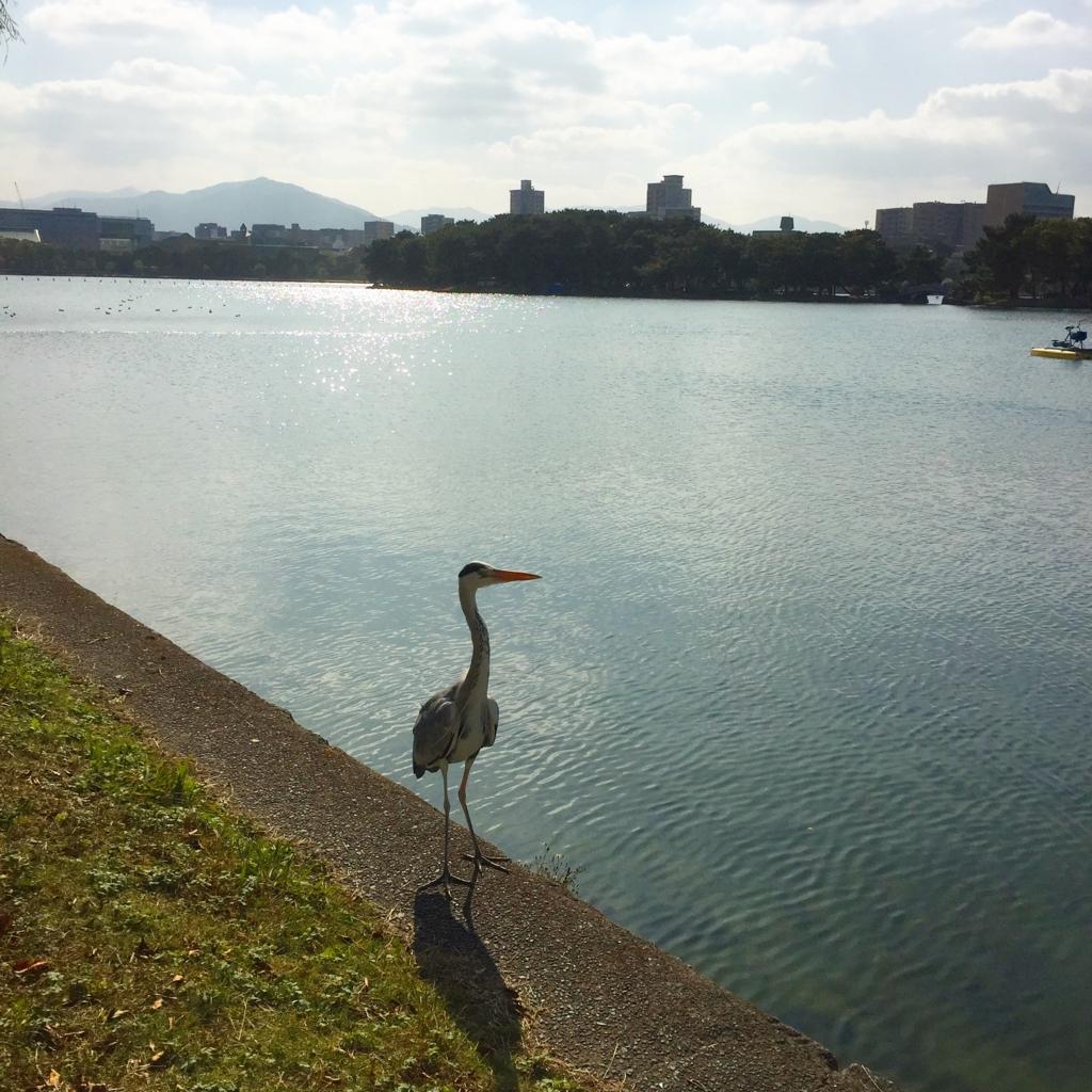 f:id:hirakata4235:20161204194514j:plain