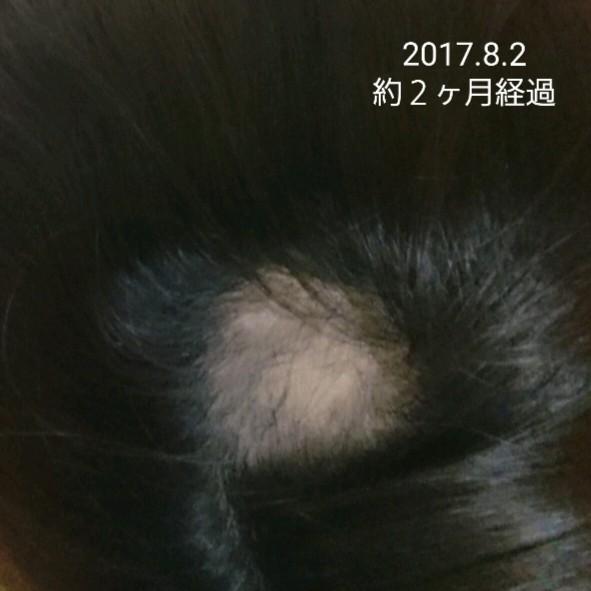 f:id:hirakegoma20190508:20190609181658j:image