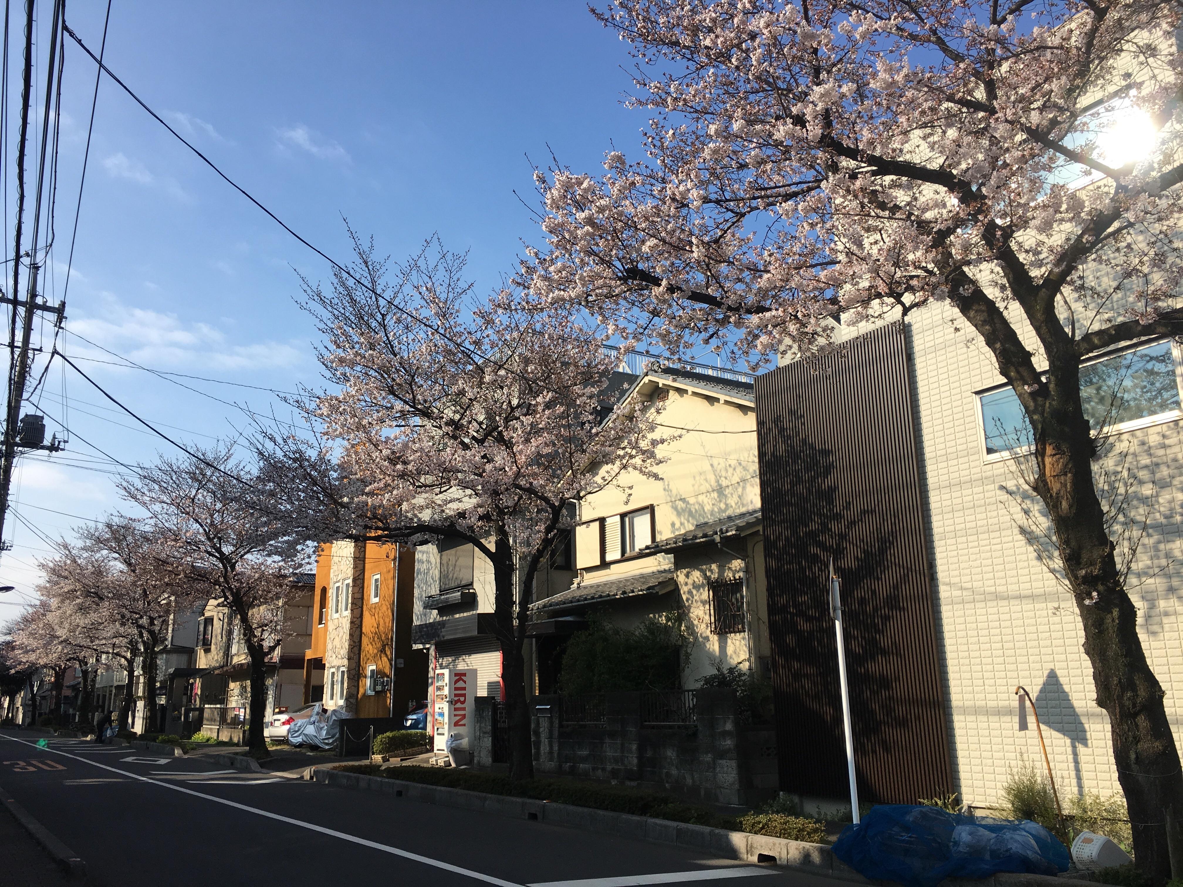 f:id:hirari-uv-taku:20170403084530j:image