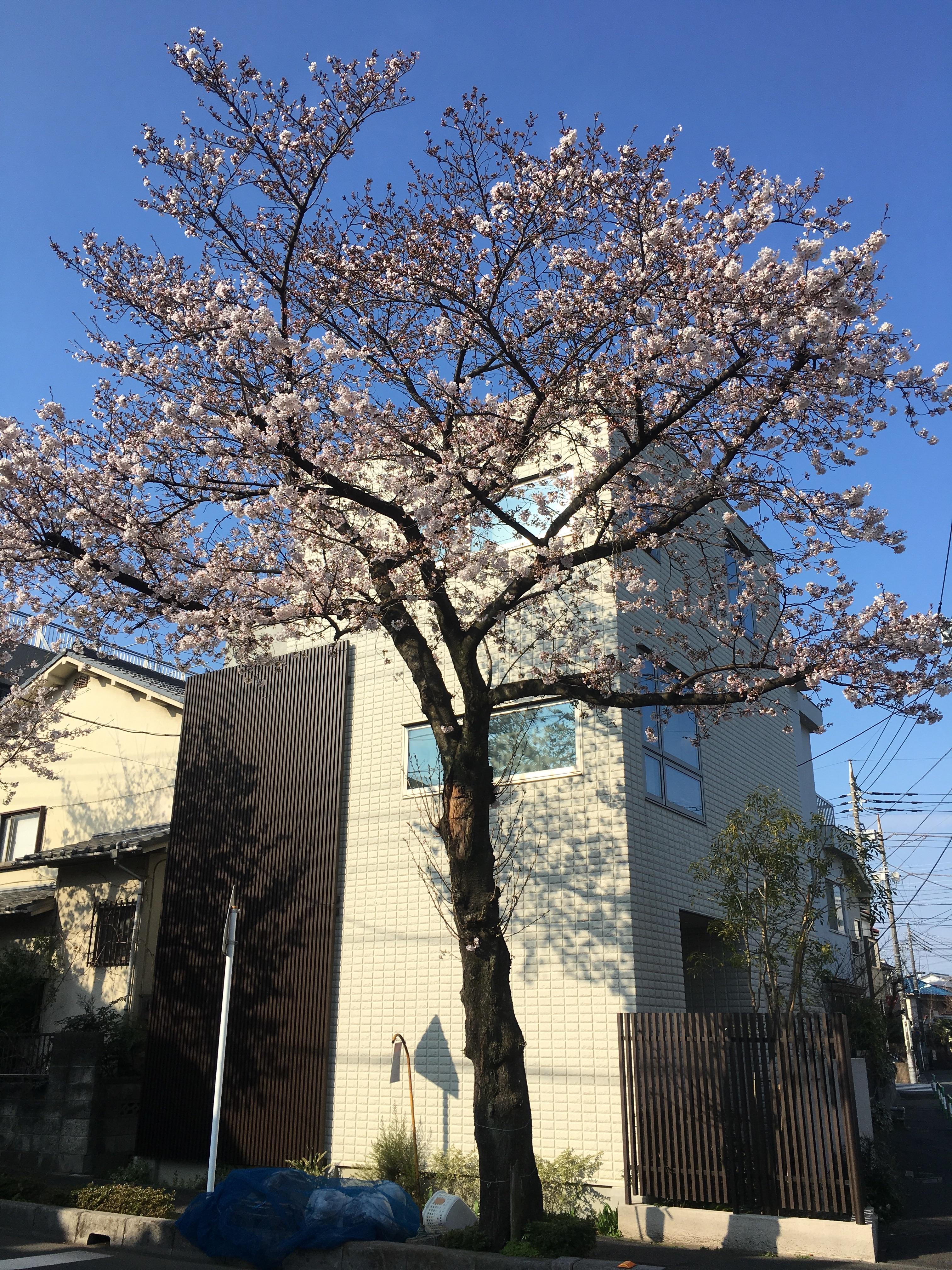 f:id:hirari-uv-taku:20170403084541j:image