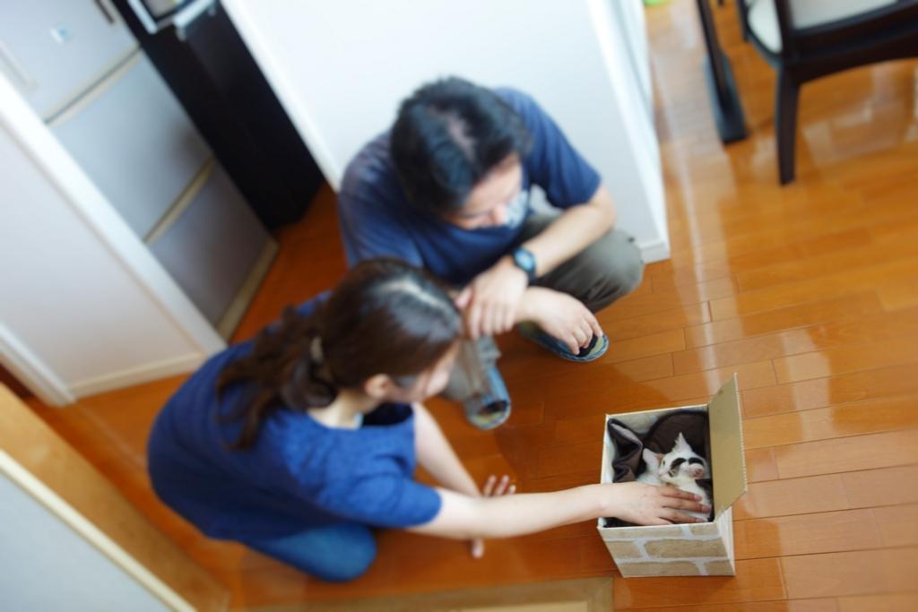 f:id:hiraryo0201:20160627113931j:plain