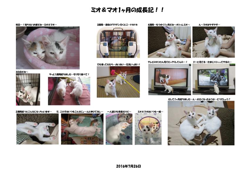 f:id:hiraryo0201:20160729082203p:plain