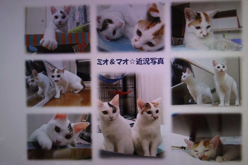 f:id:hiraryo0201:20161005083925j:plain