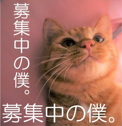 f:id:hiraryo0201:20161129124420j:plain