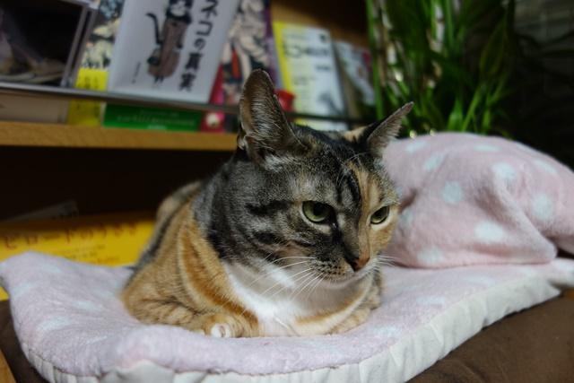 f:id:hiraryo0201:20161230111748j:plain