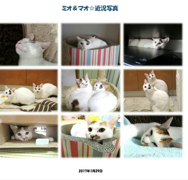 f:id:hiraryo0201:20170226004159j:image
