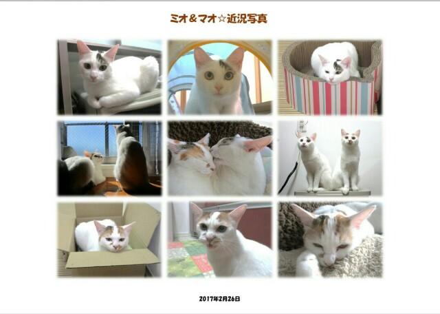 f:id:hiraryo0201:20170311200739j:image