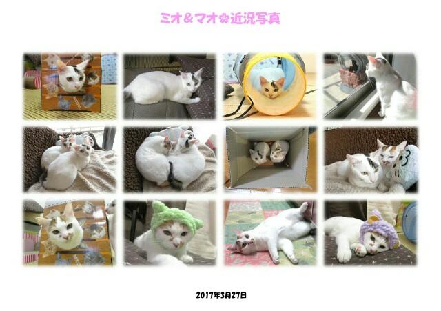 f:id:hiraryo0201:20170401174356j:image