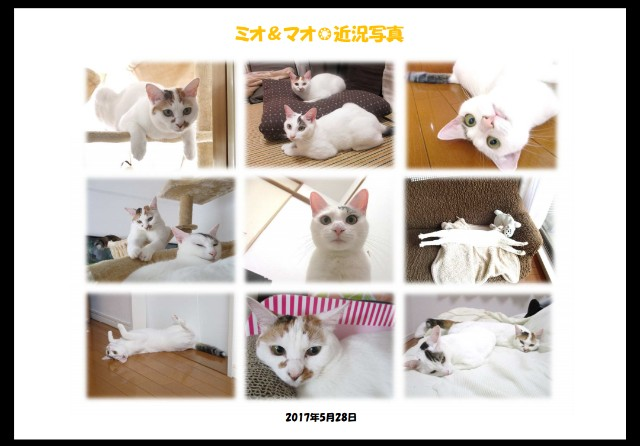 f:id:hiraryo0201:20170603084235j:image