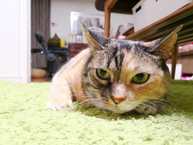 f:id:hiraryo0201:20180528220201j:image