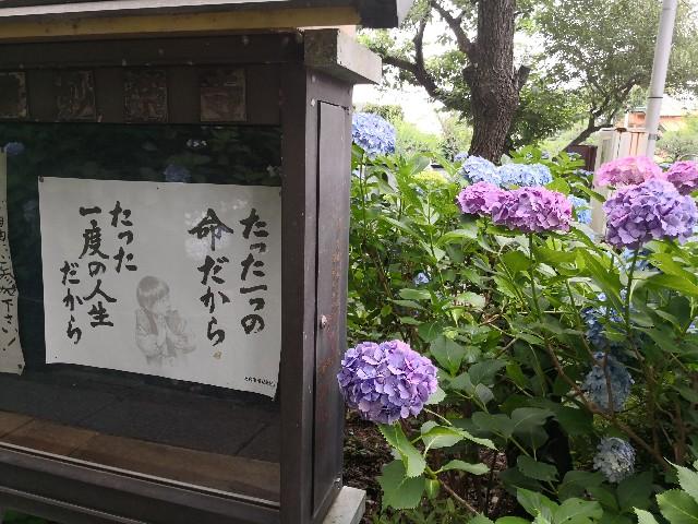 f:id:hiraryo0201:20180623071335j:image