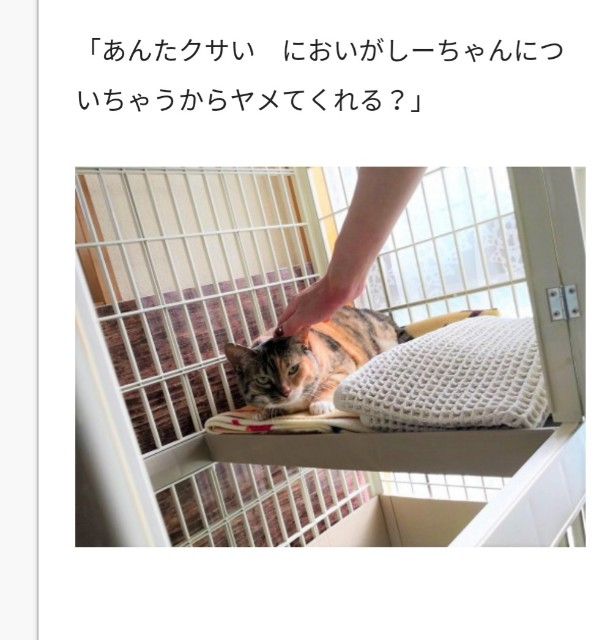 f:id:hiraryo0201:20180717191524j:image