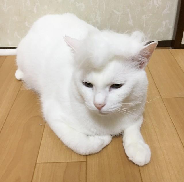 f:id:hiraryo0201:20190811075335j:image