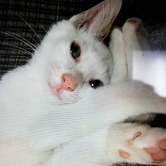 f:id:hiraryo0201:20191212215311j:image