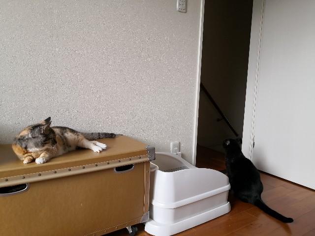 f:id:hiraryo0201:20200919161943j:image