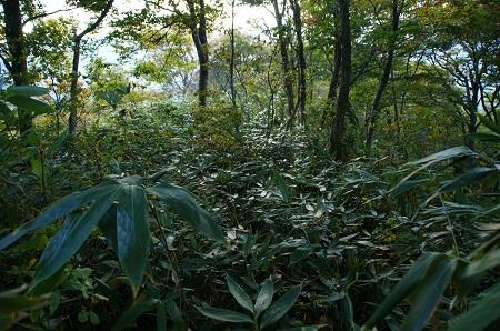 20121020金剛堂・猿ヶ山3