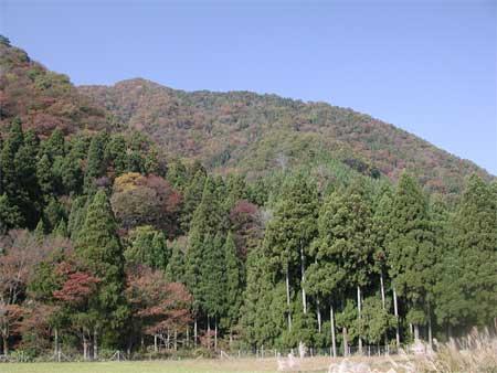 20091107七七頭・赤坂1