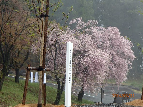 140418-21sakura5 記念植樹 プレート裏に名前が書いてある