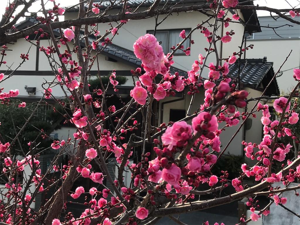 f:id:hiratafujika:20190217152727j:image