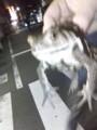 [frog]かえる