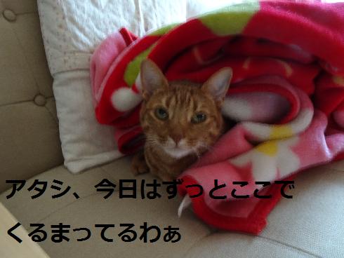 f:id:hiro-beans-attack-no1:20171118181650p:plain