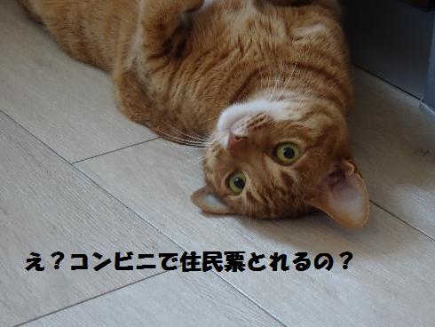 f:id:hiro-beans-attack-no1:20180313180655p:plain