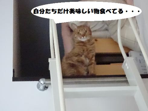 f:id:hiro-beans-attack-no1:20180318194845p:plain