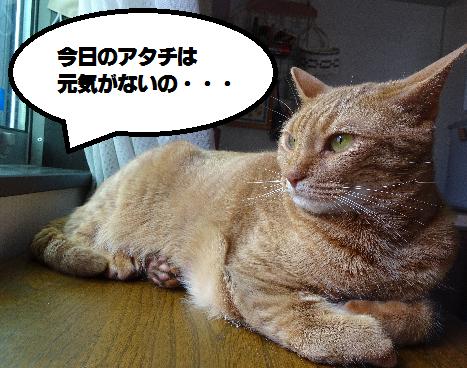 f:id:hiro-beans-attack-no1:20180503195548p:plain