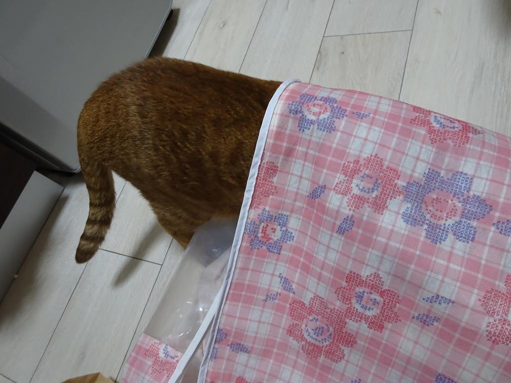 f:id:hiro-beans-attack-no1:20181201201046j:plain
