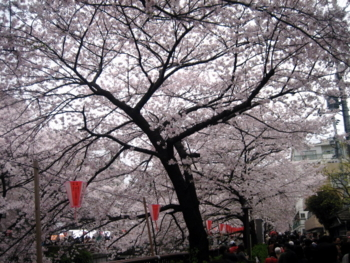 f:id:hiro-jp:20100404132459j:image