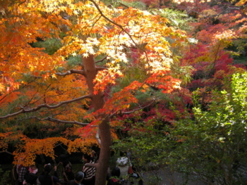 f:id:hiro-jp:20121116152325j:image