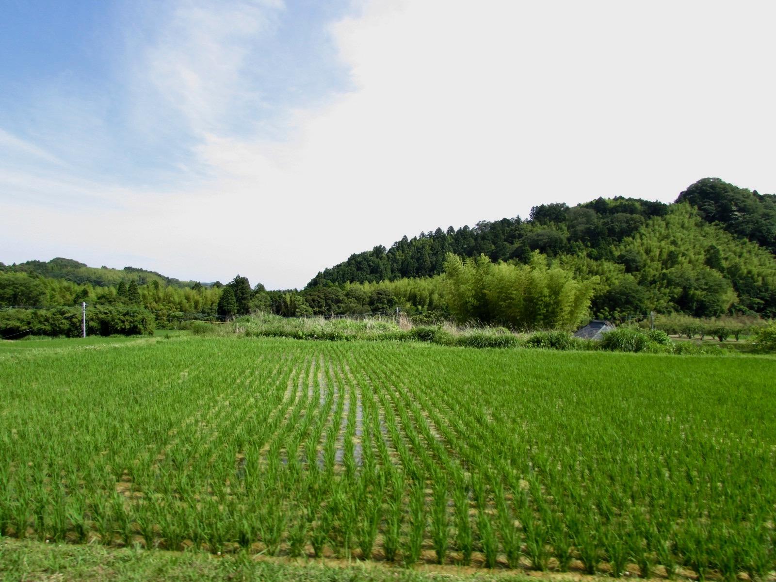 f:id:hiro-jp:20200605143712j:plain