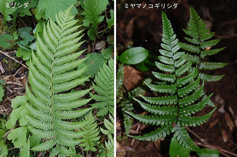 f:id:hiro1216:20101106212506j:image