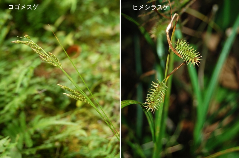 f:id:hiro1216:20111030231617j:image