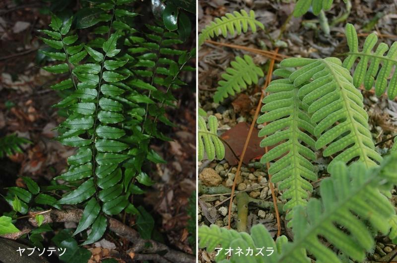 f:id:hiro1216:20111120211633j:image