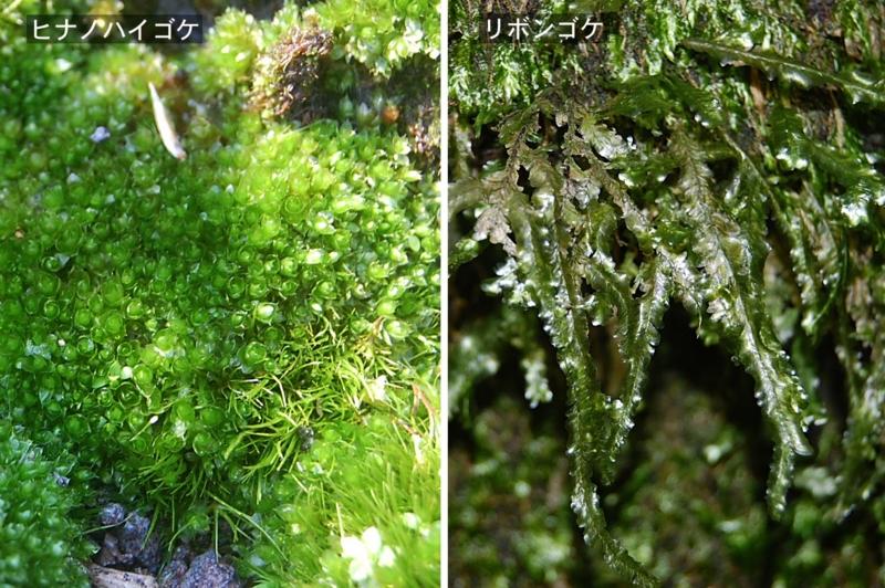 f:id:hiro1216:20111124174129j:image