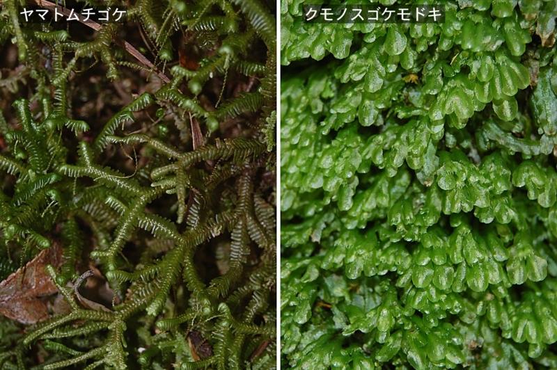 f:id:hiro1216:20111129190811j:image