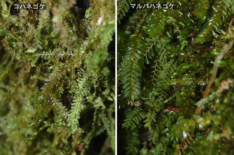 f:id:hiro1216:20111225113346j:image