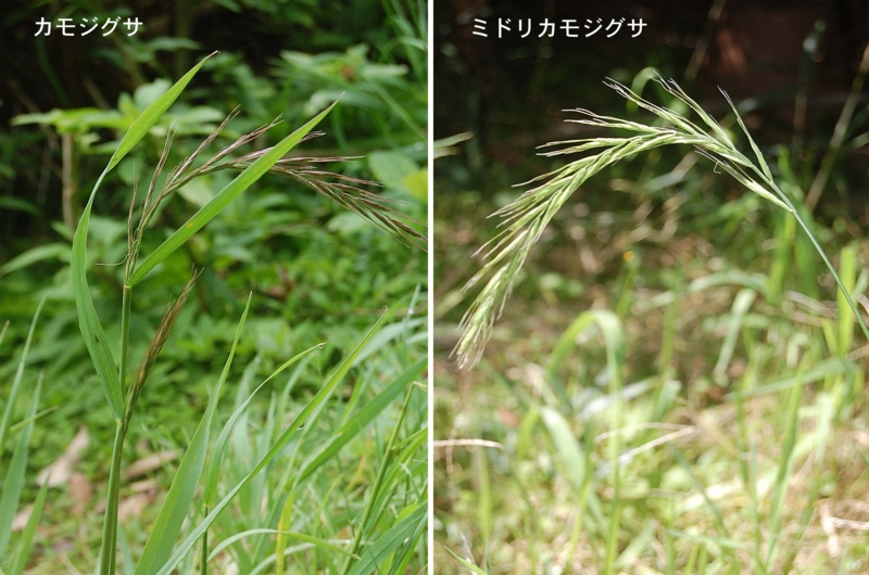 f:id:hiro1216:20120403144528j:image