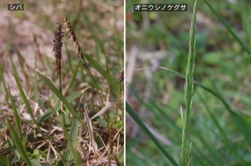 f:id:hiro1216:20120419184216j:image