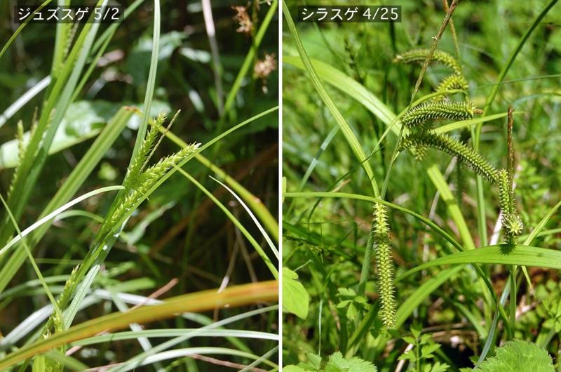 f:id:hiro1216:20120521193114j:image