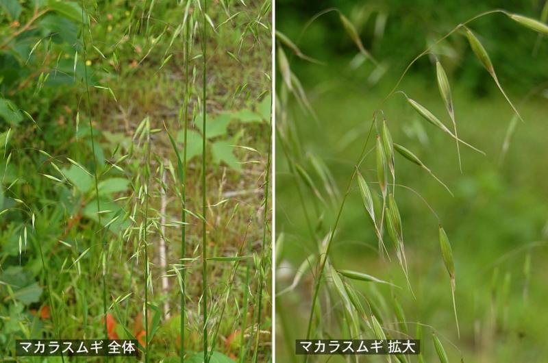 f:id:hiro1216:20120605110245j:image