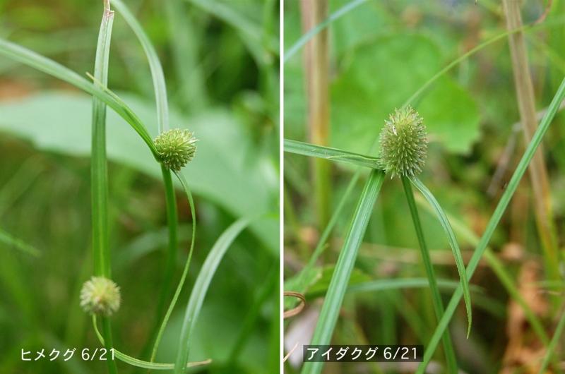 f:id:hiro1216:20120626205357j:image