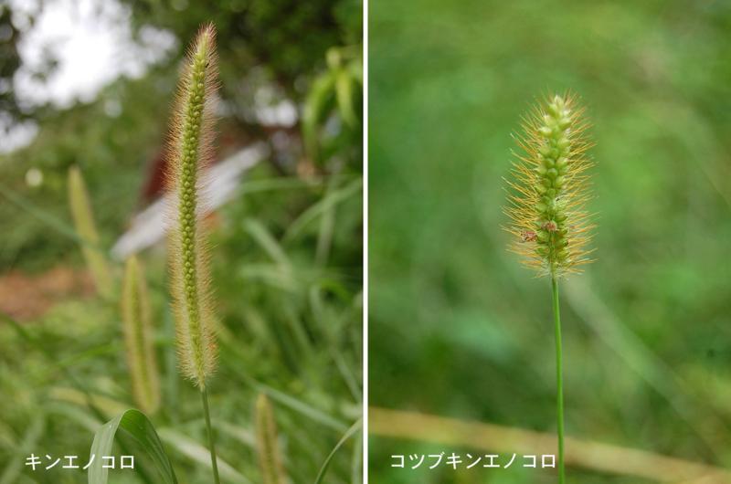 f:id:hiro1216:20120629223343j:image