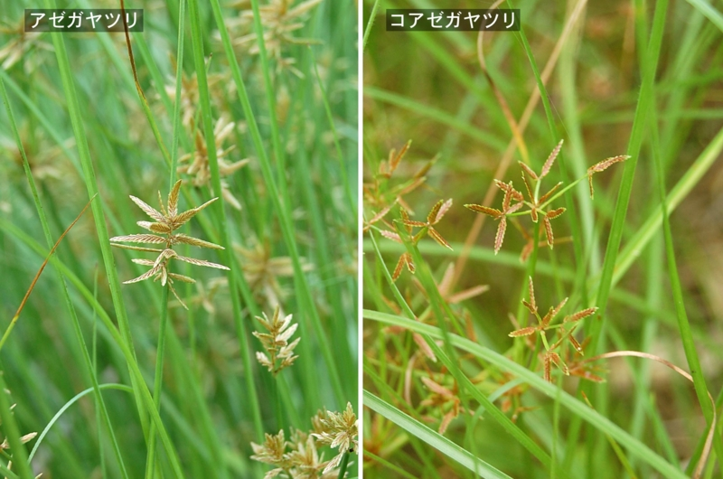 f:id:hiro1216:20120706185119j:image