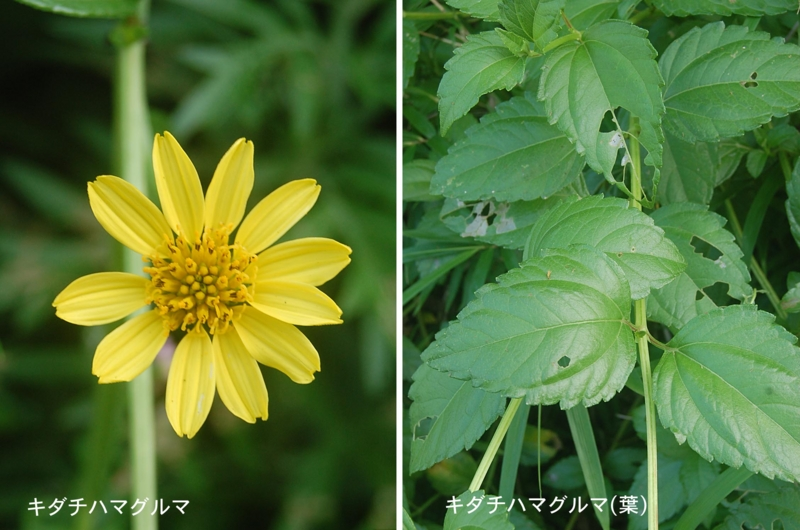 f:id:hiro1216:20120725210313j:image