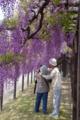 京都新聞写真コンテスト 二人仲良く